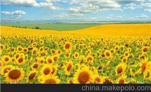 上海鲜花进口报关流程