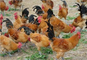 土鸡场拆迁评估
