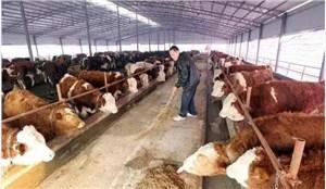 肉牛场损失评估