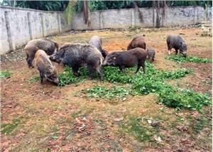 野猪养殖场拆迁评估