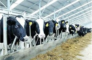大连大型奶牛场拆迁评估圆满完成