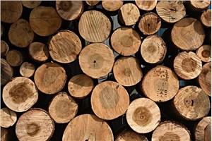 上海进口木材报关流程