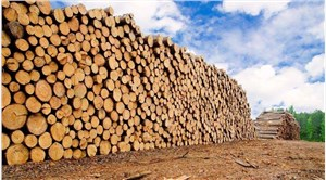 上海进口木材清关代理流程