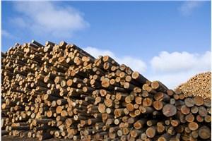 上海进口木材清关代理公司