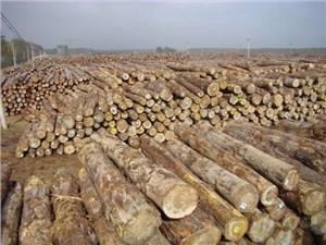 木材进口清关流程及清关单证