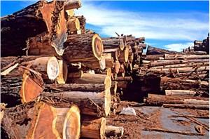 上海进口俄罗斯木材清关