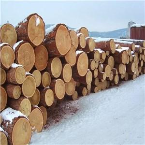 上海进口濒危木材清关