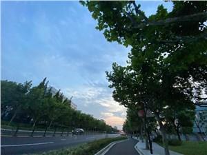 张江集电港13
