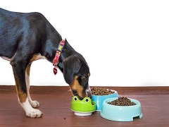宠物粮进口流程