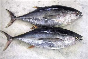 代理日本海鲜进口报关|冷冻海鲜进口报关流程
